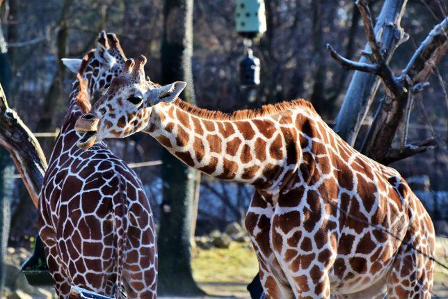 visita escolar al zoo
