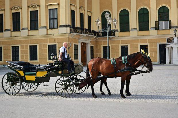paseo en coches de caballos por viena