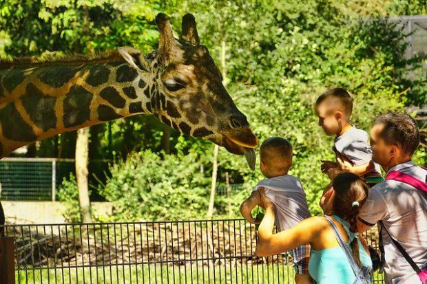 familia feliz en el zoo
