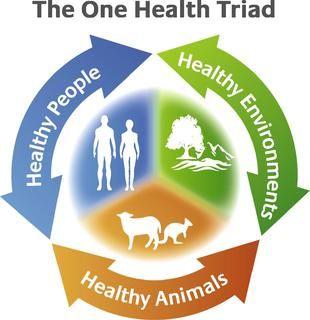 En el Día Internacional de los Derechos de los Animales, sea benéfico para todos